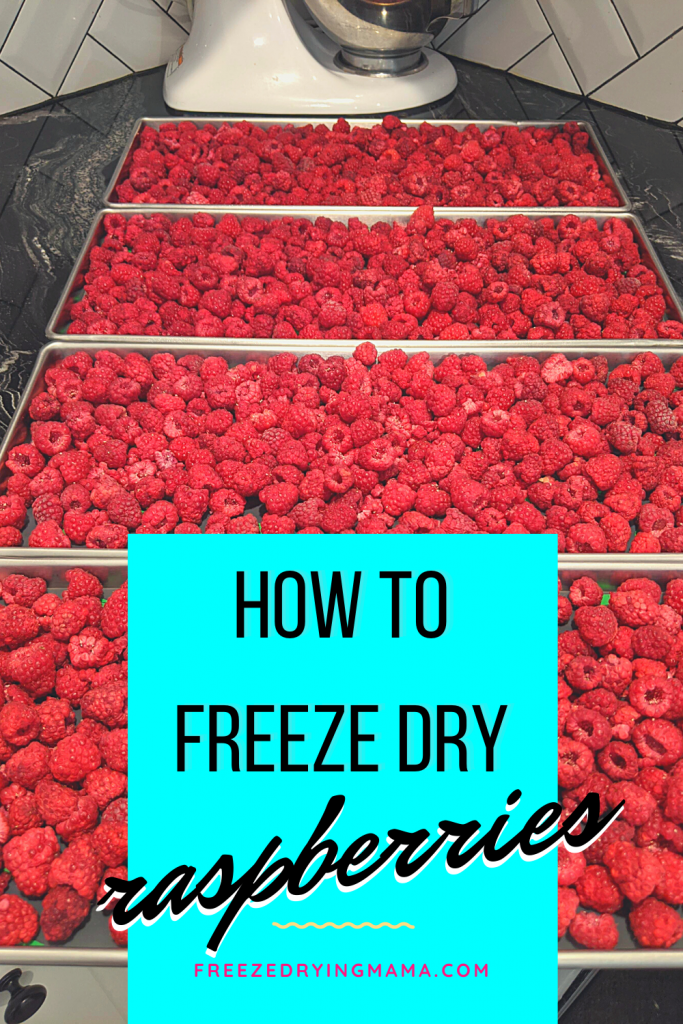 I was hesitant about freeze drying whole raspberries (they took 26 hours) because they take up space in Mylar bags and I thought they'd just end up falling to pieces anyway. Honestly, I was quite surprised to find that they are actually very firm and oh.....what a wonderful treat! I was amazed at how resilient freeze dried whole raspberries are. They stay together and hold their shape well. Their wonderful flavor is enhanced, and they are a v-e-r-y nice snack!